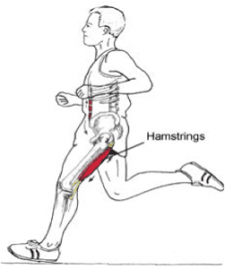 Hamstring Blessure Fysiotherapie